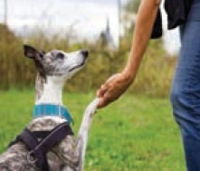 Eğiticiler tarafından davranışları biçimlendirilen köpek